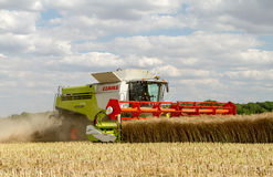 Modern claas combine harvester cutting crops Royalty Free Stock Photo