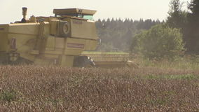 Modern combine harvest wheat grain field and dust rise. Tripod. stock footage
