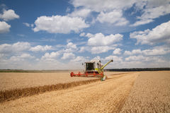 Modern combine (harvester)  harvesting on wheat field Royalty Free Stock Photography