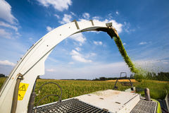 Modern combine harvester unloading green corn Stock Photos