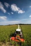 Modern combine harvester unloading green corn Stock Image