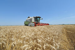 Modern combine harvester at work Royalty Free Stock Image