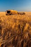 Modern combine harvesting wheat Stock Photography