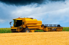 Modern combine harvesting wheat Royalty Free Stock Photo