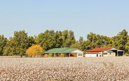 Modern Cotton Plantation Royalty Free Stock Image