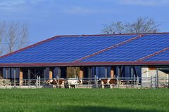 Modern cowshed with a solar system. Over the roof royalty free stock photos