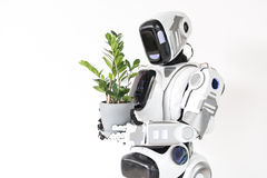 Modern cyborg is growing houseplant Stock Images