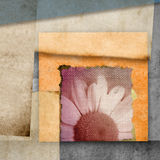 Modern daisy flower greeting card Royalty Free Stock Photography
