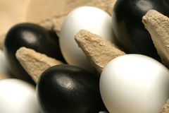 Modern easter decoration. Black and white easter eggs in an egg carton Stock Image