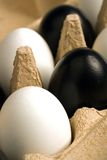 Modern easter decoration. Black and white easter eggs in an egg carton Royalty Free Stock Images