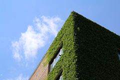 Modern and eco friendly natural architecture Royalty Free Stock Photos