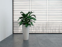 Modern empty room with green plant and white flower pot Royalty Free Stock Photo