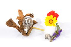Modern energy saving light bulb and old low-efficiency bulb. Modern energy saving light bulb and old low-efficiency bulb with flowers on white background stock photo