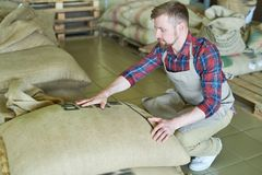 Modern Entrepreneur with Coffee Bags. Full length portrait of handsome young man wearing apron reading writings on   burlap bags with coffee checking it for Royalty Free Stock Images