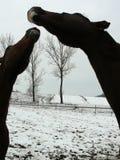 Modern för hästvinterkyssen kysser henne för att behandla som ett barn arkivfoto