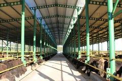 Cattle shelter Stock Photo