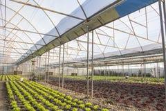 Modern farm for growing lettuce Stock Photos