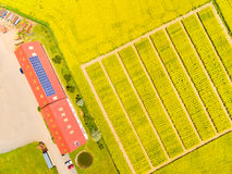 Modern farm with organic produce. Aerial view to green wheat and rapeseed fields and modern farm with organic produce. Agricultural landscape from above Royalty Free Stock Image