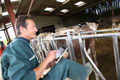 Modern farmer with tablet in barn. Farmer in barn using digital tablet Stock Images