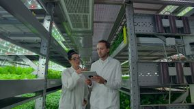 Modern farmers of the future monitor the growth of plants and grow pure non-modified natural products in vertical farms. Modern farmers of the future monitor the stock footage