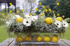 Modern floral arrangement with white gerbera flowers and lemon f. Ruits. Party decoration Stock Images