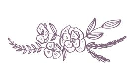 Modern flowers drawing and sketch floral with line-art Isolated on white background Royalty Free Stock Photography