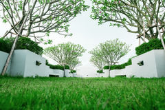 Modern garden on rooftop, green grass lawn with tropical tree Stock Image
