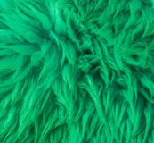 Modern green soft hairy animal skin macro closeup texture background royalty free stock photo