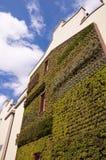 Modern green wall Stock Photography
