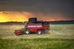 Modern heavy harvester removes the ripe wheat bread in field before the storm. Seasonal agricultural work royalty free stock photography