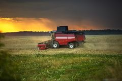 Modern heavy harvester removes the ripe wheat bread in field before the storm. Seasonal agricultural work stock image