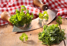 Modern herb cutter (wiegemes) with wooden handles Stock Photography