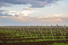 Modern high-tech plantations of vineyards in early spring royalty free stock image