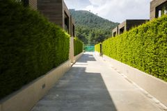 Modern houses with green plant wall. Actual eco architecture Stock Images