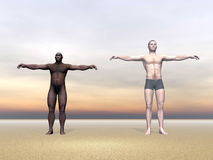 Modern human and homo erectus - 3D render Royalty Free Stock Photography