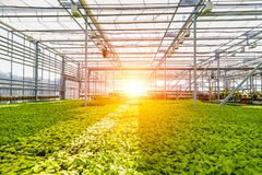 Modern hydroponic greenhouse with climate control system for cultivation of flowers and ornamental plants for gardening.  stock image