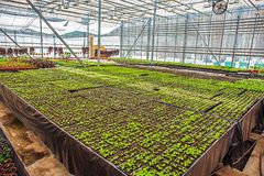 Modern hydroponic greenhouse or glasshouse interior inside, industrial agriculture stock photos