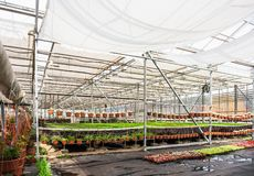 Modern hydroponic greenhouse interior with climate control, cultivation of seedings, flowers. Industrial horticulture stock images