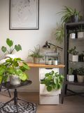 Modern industrial black and white study room with numerous green houseplants such as pancake plants and cacti. Creating an urban jungle feeling stock photo