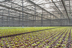 Modern industrial Nursery Hothouse Royalty Free Stock Images