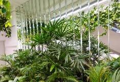 Modern inredesign med inomhus växter royaltyfri fotografi