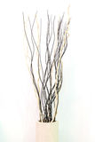 Modern interior decoration, two tone twigs in wooden vase on whi. Te background Royalty Free Stock Photography