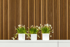 Modern interior with three flower pots Royalty Free Stock Photo