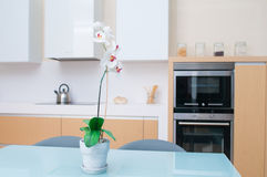 Modern kitchen in a modern house Royalty Free Stock Photo