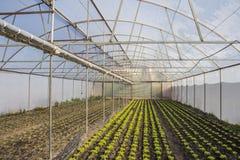 Modern landbouwbedrijf voor het kweken van sla Stock Afbeeldingen