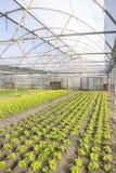 Modern lantgård för växande grönsallat Arkivfoto