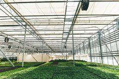 Modern large greenhouse or hothouse, cultivation and growth seeds  of ornamental plants, flower nursery inside interior Stock Images