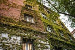 Modern lägenhetbyggnad som täckas, genom att klättra växten Royaltyfri Fotografi