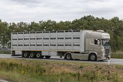 Modern livestock transporter on its way to the slaughterhouse. A modern cattle truck with pigs on its way to the slaughterhouse stock photos