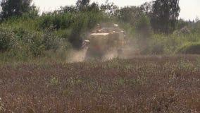 Modern machinery harvest wheat grain field near forest stock video